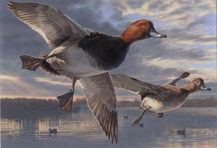 Flying Duck Painting RW64-64th Duck Stamp